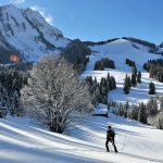 Snowshoeing - Forest slope
